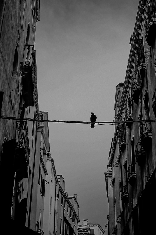 Fotograf profesionist   Dan Malureanu www.sesivede.ro   +40 721244244